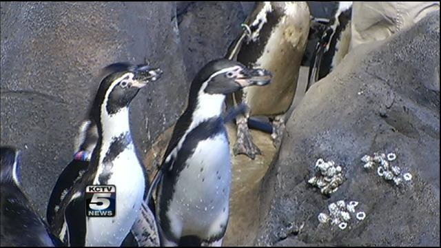 Saturday and Sunday is Snow Zoo at the Kansas City Zoo. (KCTV5)