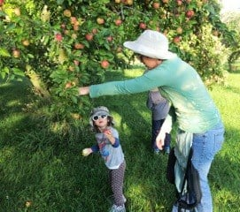 After the Harvest-gleaning apples