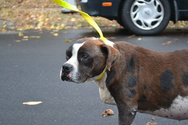 Dog Rescue Groups In Kansas City