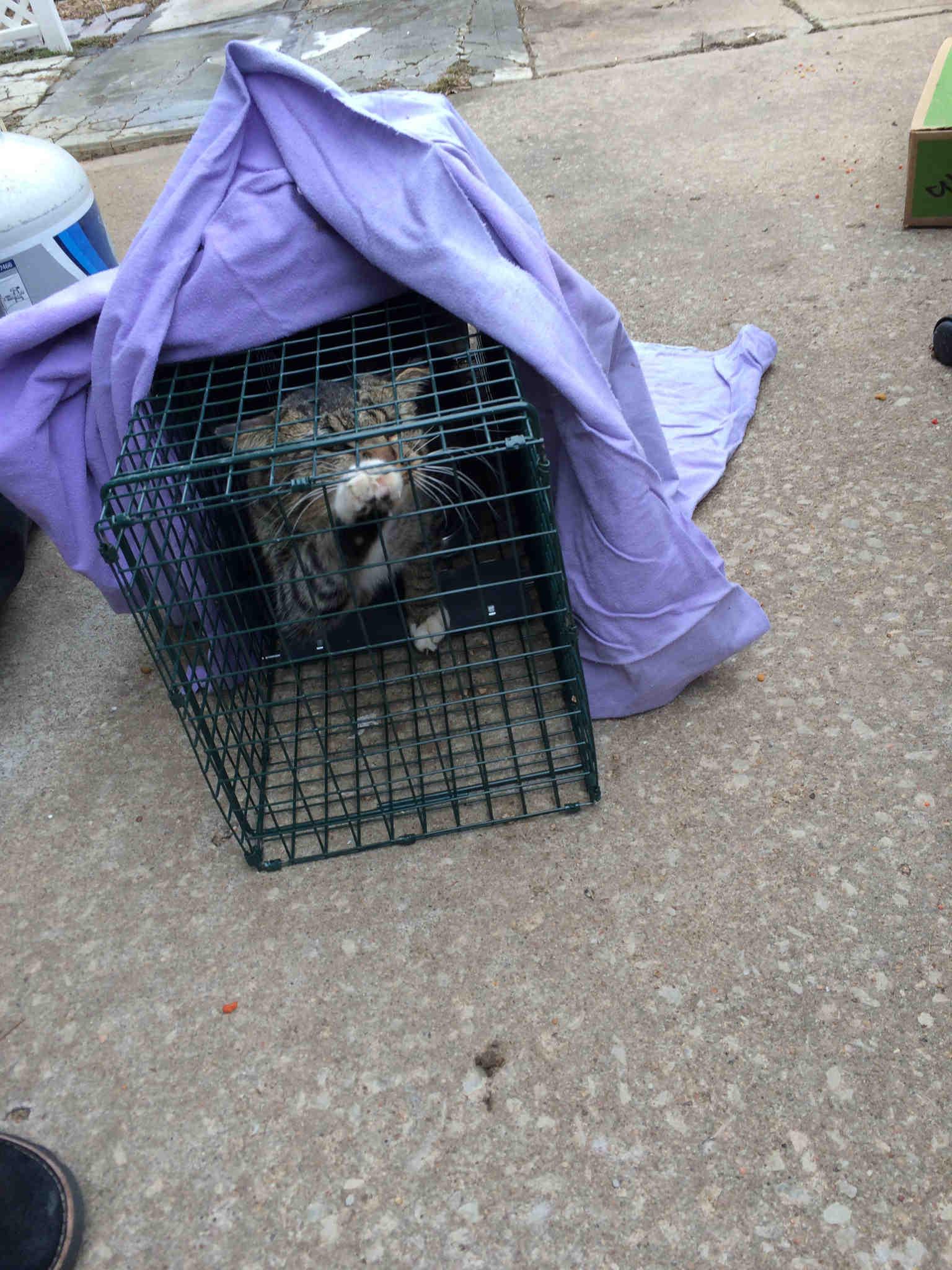 rescue groups tackle kansas city feral cat colonies kctv5
