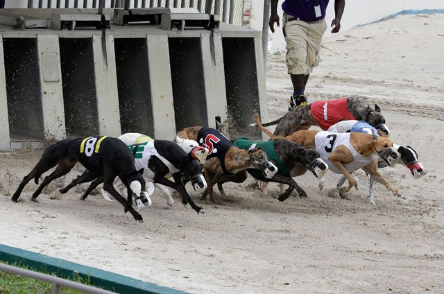 A Kansas Senate committee has approved a bill aimed at reviving a dog and horse racing complex in KCK with slot machines.