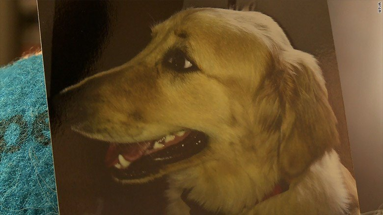 A Virginia woman says she is devastated after her dog died when he was accidentally left in a heated drying cage by a groomer at Petco. (WTVR via CNN)