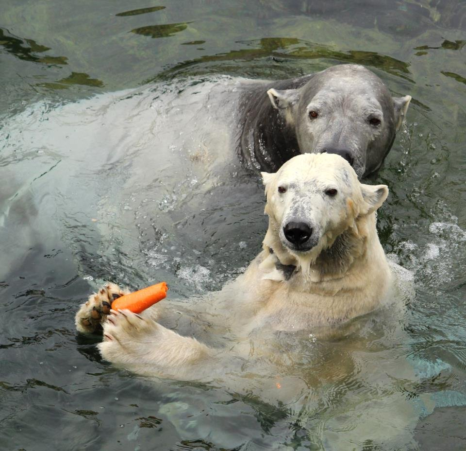 """positive climate of zoos What is the national climate assessment (nca) the nca report is the official us government's """"state of the union"""" about climate change, vetted by 13 federal agencies."""