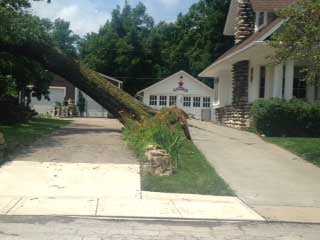 Tree damaged by storm in Independence