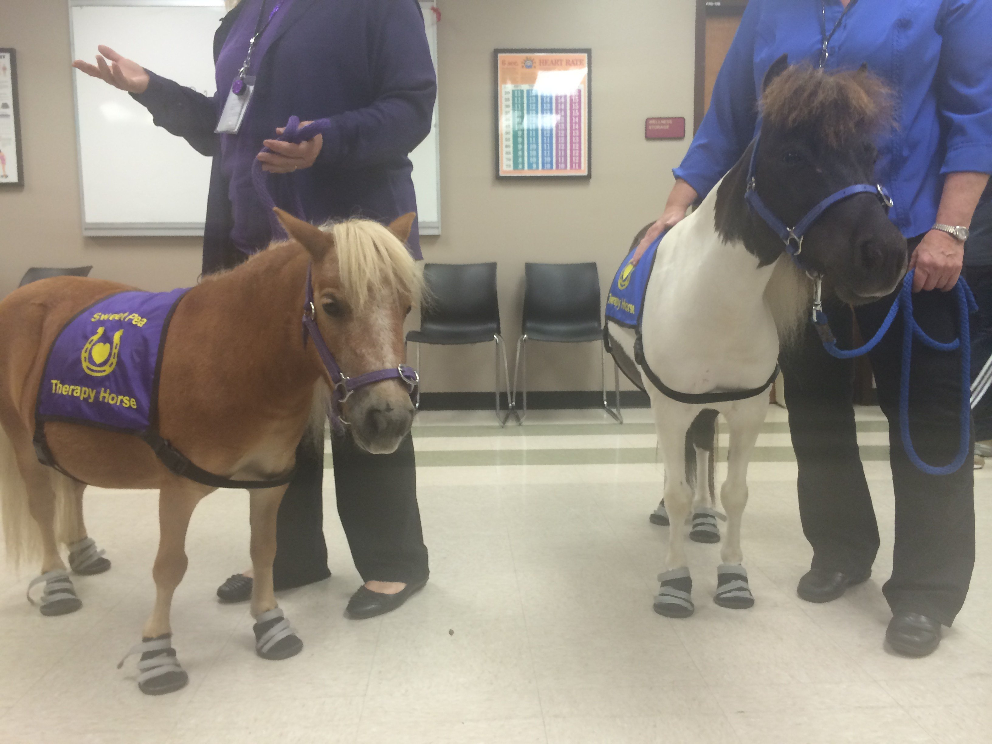 Sweet Pea and Pippin therapy horses
