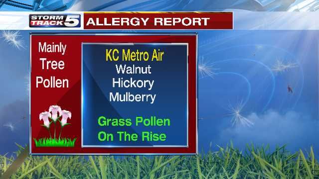 In the Kansas City metro, it's mainly walnut, hickory and mulberry trees that are releasing the most pollen. But the tree pollen count is actually slowly going down.